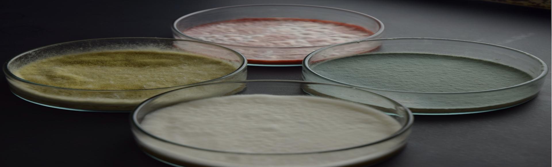 食用微生物の潜在能力を最大限に活かしてみる