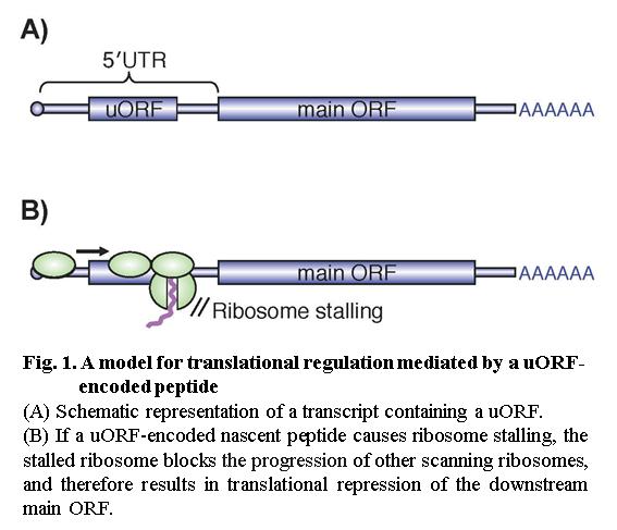 Laboratory of Molecular Biologly, HOKKAIDO UNIVERSITY -Translational ...