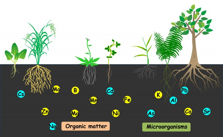 Plant nutrition the special postgraduate program in for Soil nutrients